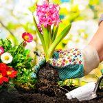 Grow A Proper Garden This Spring