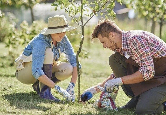 Taking Care of Your Trees Will Take Care of You